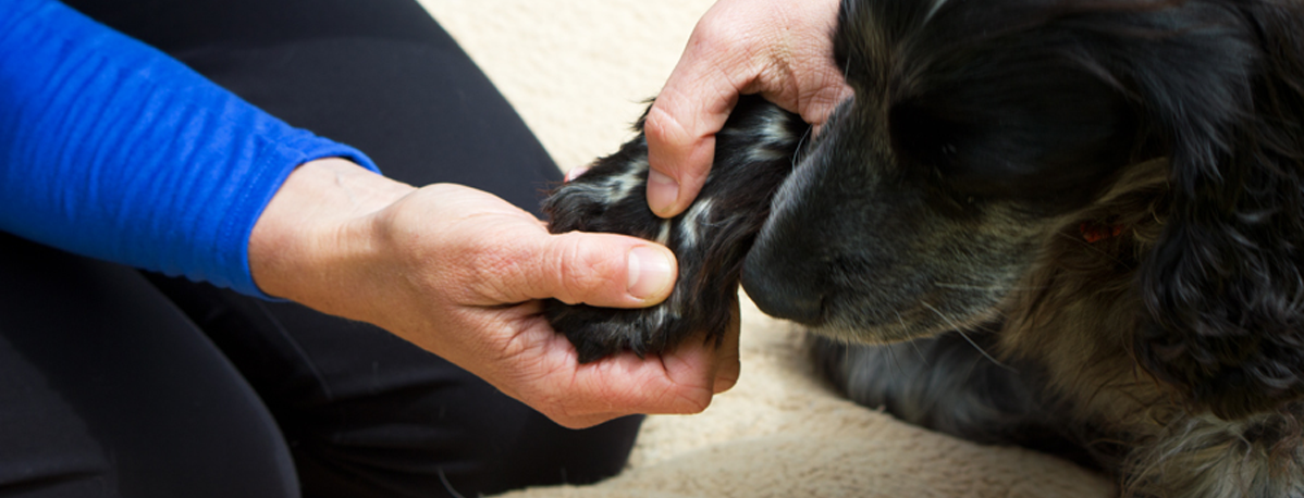 Canine Osteopathy sussex